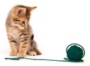 kittenyarn.jpg